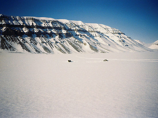 Сибирские иамериканские ученые спасут Арктику отпотепления