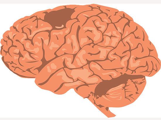 Фруктоза оказалась опасна для мозга
