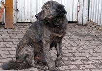 Следы крови и свежие могилы: московский собачий приют проверит прокуратура