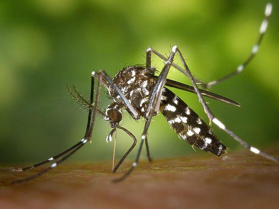 Народные репелленты: как спастись от комаров