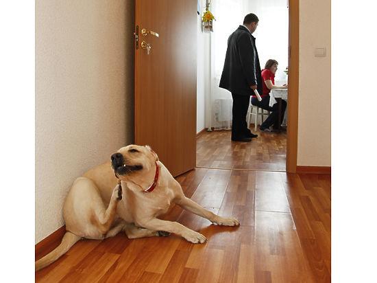 Сделки купли-продажи квартир подорожают в 2–3 раза