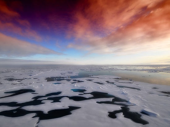 В пугающе быстром таянии льдов Арктики ученые обвинили водоросли