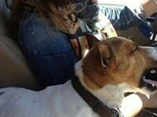 Погибла любимая собака Жанны Фриске