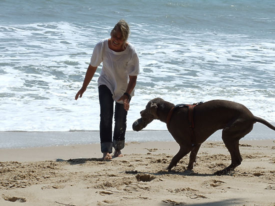 На море вместе с собакой - Общество