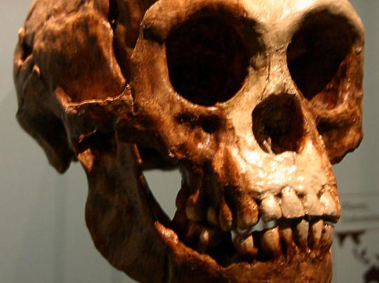 Люди и древние «хоббиты» были соседями по пещере