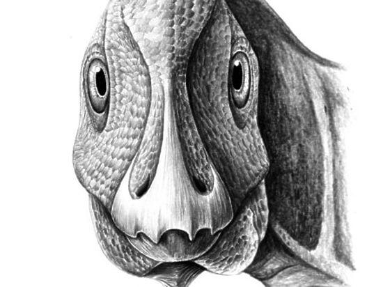 ВРумынии отыскали динозавра с незаурядным пороком