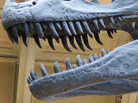 Назван вчесть духа: ученые обнаружили доэтого неизвестного динозавра с маленькими лапами