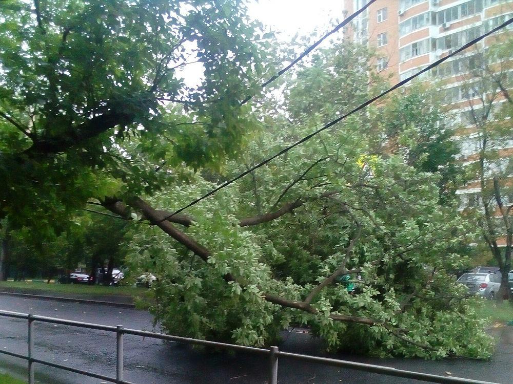 Снова гроза прошла в столице днём 20-го июля. Погодные неприятности были непродолжительны, но имели серьезные последствия: интернет-пользователи уже поделились в сети фотографиями последствий. Слава богу обошлось без жертв.