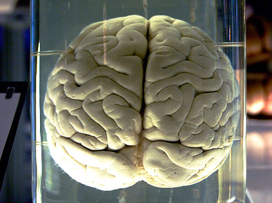 Нейрофизиологи обнаружили сотню ранее неизвестных областей человеческого мозга