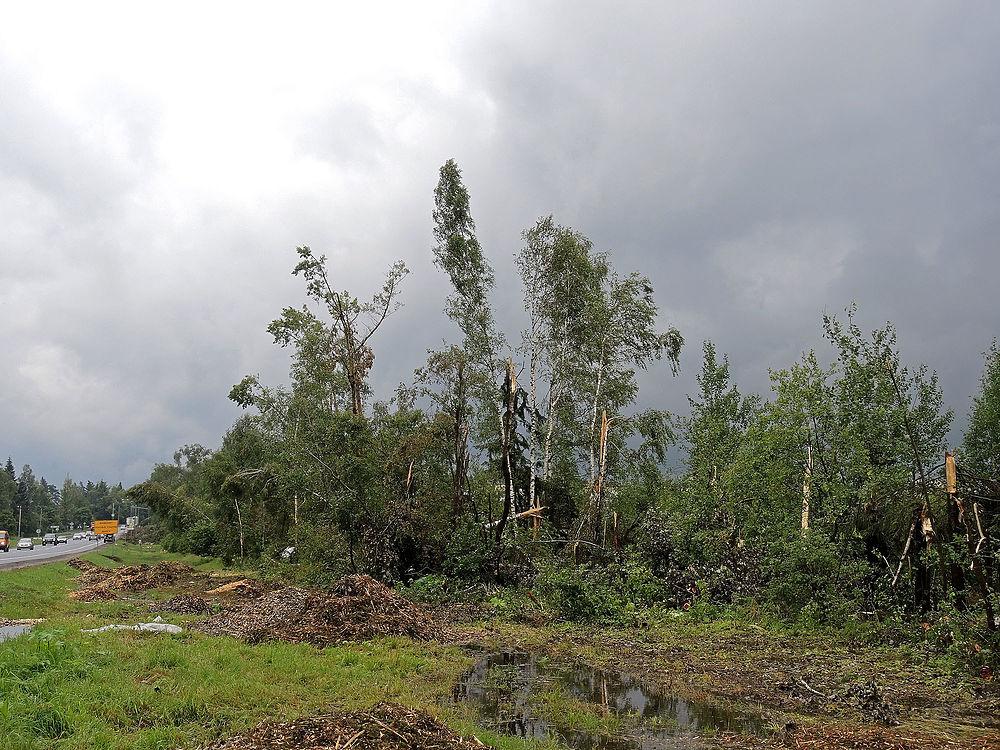 Ураган в Рузском районе в Подмосковье