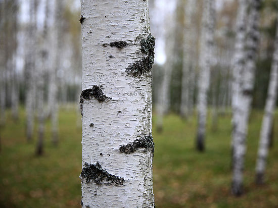 ЕРдобилась для Жулебинского леса охранного статуса