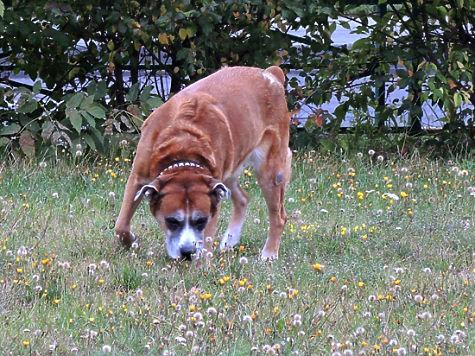 РОСЗАКОН: Статья 8. Государственный ветеринарный надзор