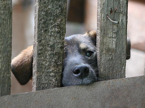 Работники МЧС столицы спасли собаку изподземного коллектора