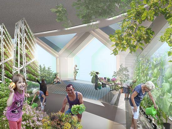 Тимирязевскую сельхозакадемию снова предложили реформировать: на этот раз архитекторы