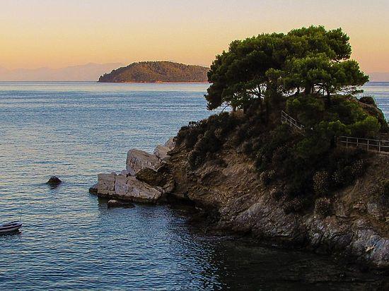 Ученые обнаружили самое старое дерево вевропейских странах