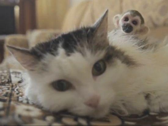 Кошка изТюмени, «усыновившая» обезьяну, стала звездой интернациональных новостей