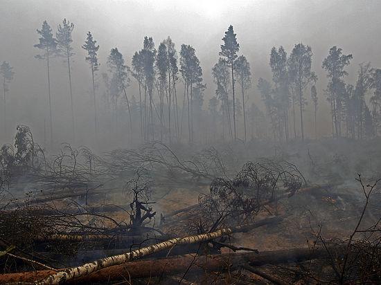 ВКраснодарском крае напали натушивших лесные пожары активистов «Гринписа»