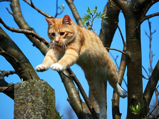 Кошки оказались виновны ввымирании 63 видов животных