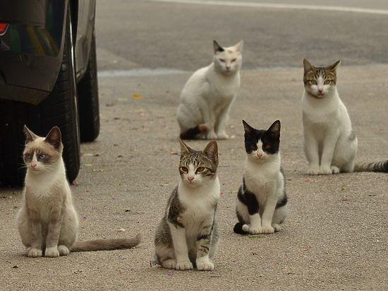 Вподвалах столичных домов хотят построить теплые домики для бездомных котов