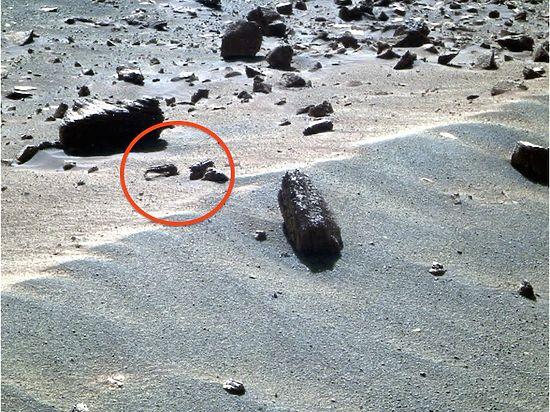 Уфологи нашли на Марсе скорпиона и креветку
