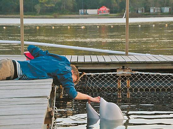 Рыба тухлая, вода грязная: откровения работника океанариума, где погибли дельфины