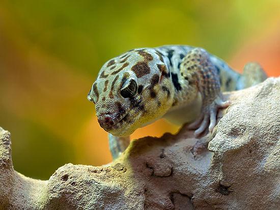 Из-за человека популяция позвоночных животных сократилось более чем вдвое