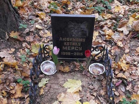 ВКрасногорском районе отыскали нелегальное кладбище домашних питомцев
