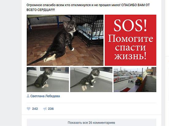 Котенка изЛипецка, которым дети играли вбейсбол, будут лечить вПитере