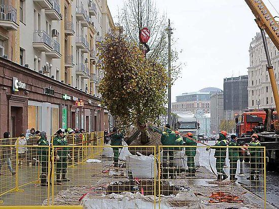 «Зеленые пояса» засадят антивандальными деревьями