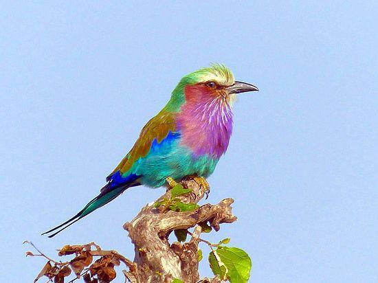В Африке открыты три новых вида птиц