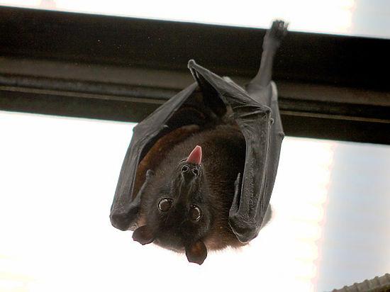 Обнаружены животные, летающие быстрее, чем любая птица