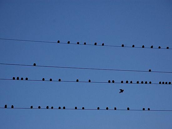 Экологи пророчат скорое вымирание сотен видов птиц