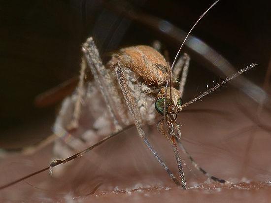 «Доставить 30 живых комаров»: какую подработку предлагают в Москве