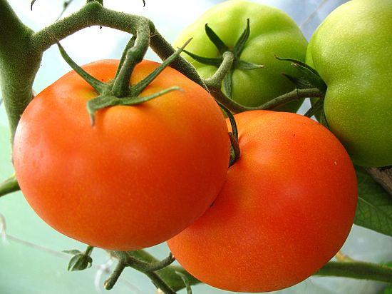 Минсельхоз пообещал продлить запрет турецких помидоров, чтобы не упали цены