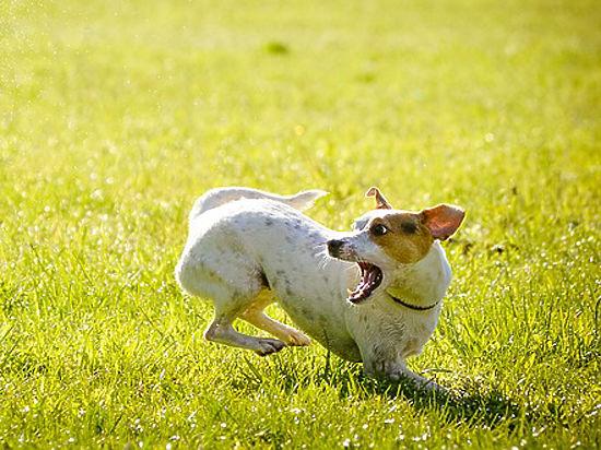 Собаки запоминают происходившие при них события почти как люди