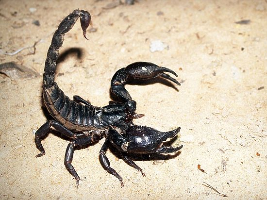 Наталья самульченко скорпион смоленск