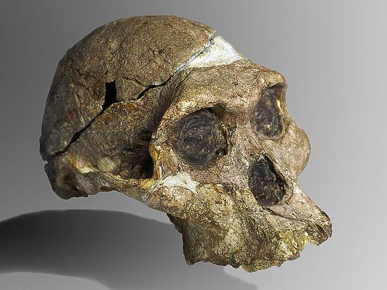 Палеонтологи обнаружили в Танзании следы австралопитека-гиганта