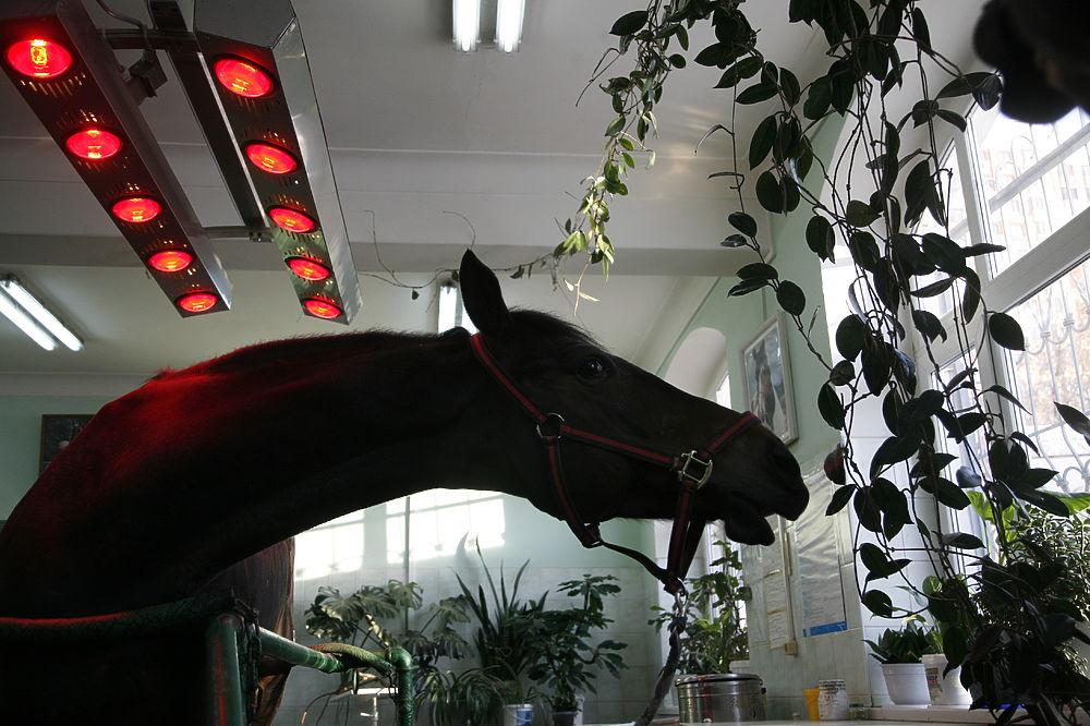 Картинки по запросу лошади полицейские фото