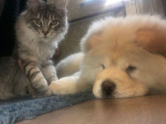 Россиянам запретят дарить детям котят и устраивать собачьи бои