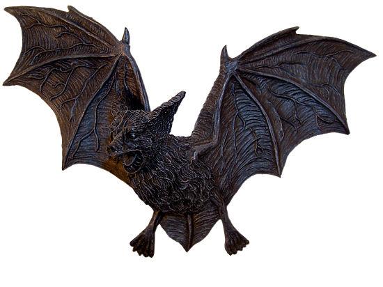 Летучие мыши-вампиры вБразилии начали употреблять кровь людей