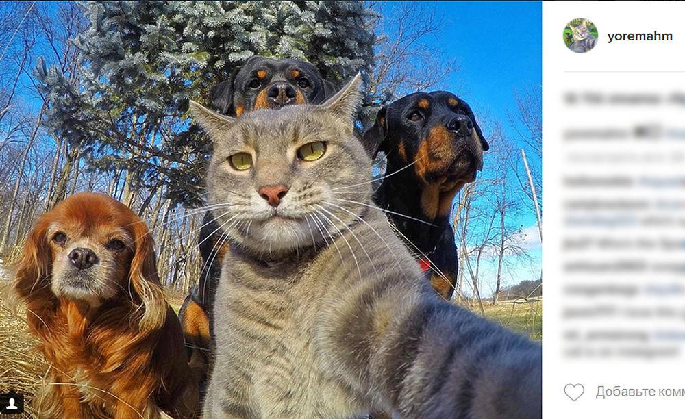 Интернет пользователи признали селфи кота по кличке Мэнни лучшими, в наступившем 2017 году.