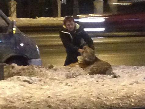За львенка, «работающего» в кальянной, заступились депутаты и зоозащитники