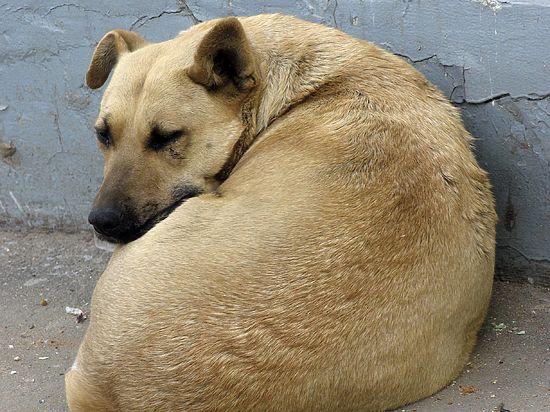 В Алтайском крае собака спасла двухлетнего мальчика, брошенного собственной матерью