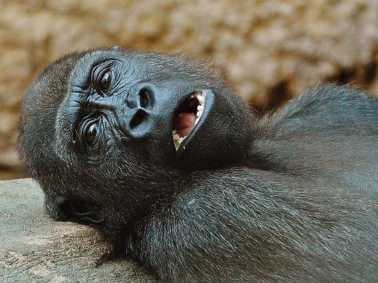 Зоологи выяснили, что «тяжелое детство» продлевает жизнь диких животных