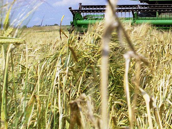 Секс видео на пшенице