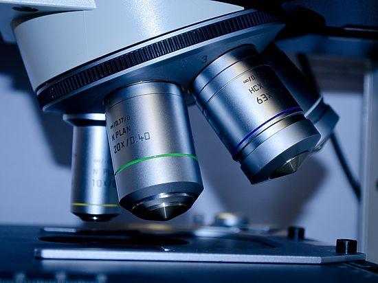 Ученые изАвстралии раскрыли «ген насыщения», который спасет мир отожирения