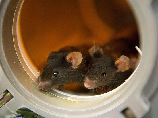 На МКС высадится мышиный десант