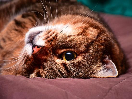 Тайный язык кошек: как разгадать поведение питомцев по хвостам