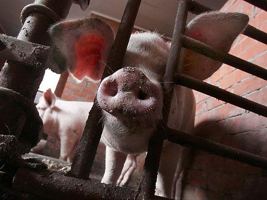 Украина стала крупнейшим покупателем российского мяса из-за ДНР и ЛНР