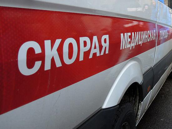 В Якутске питбультерьер загрыз младенца, лежавшего в коляске